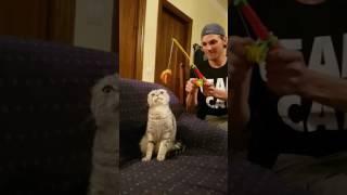 Cum sa pescuiesti o pisica in apartament