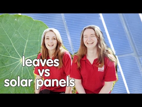 Plants vs Solar Panels: Which is better at capturing solar energy? | At-Bristol Science Centre