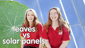 Plants vs Solar Panels: Which is better at capturing solar energy? | We The Curious