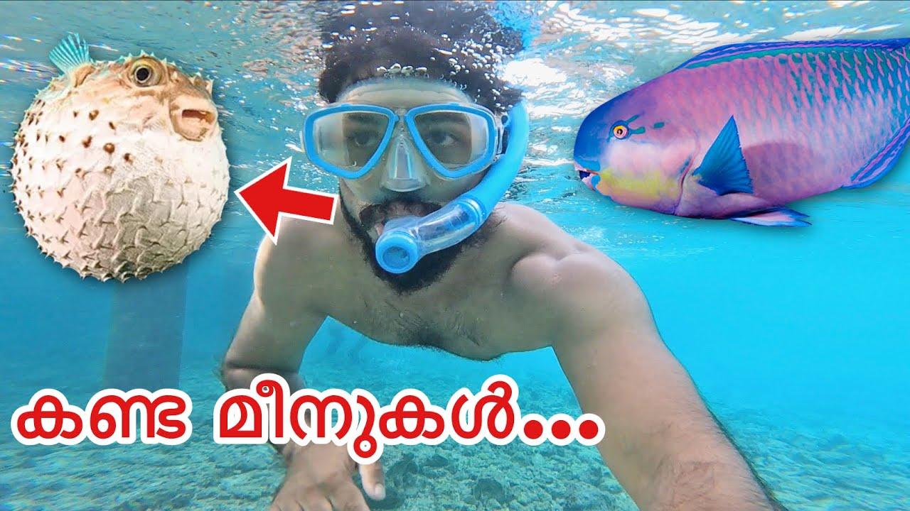 ക്യാമറയും ആയി കടലിൽ മുങ്ങിയതാ... പിന്നെ കണ്ടത്... | Snorkelling in Malidives | bookmytripholidays