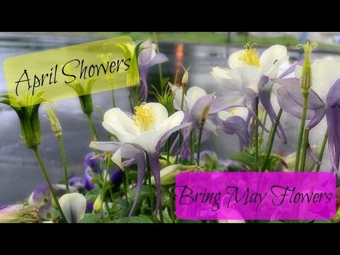 april showers bring may flowers daily 609 youtube