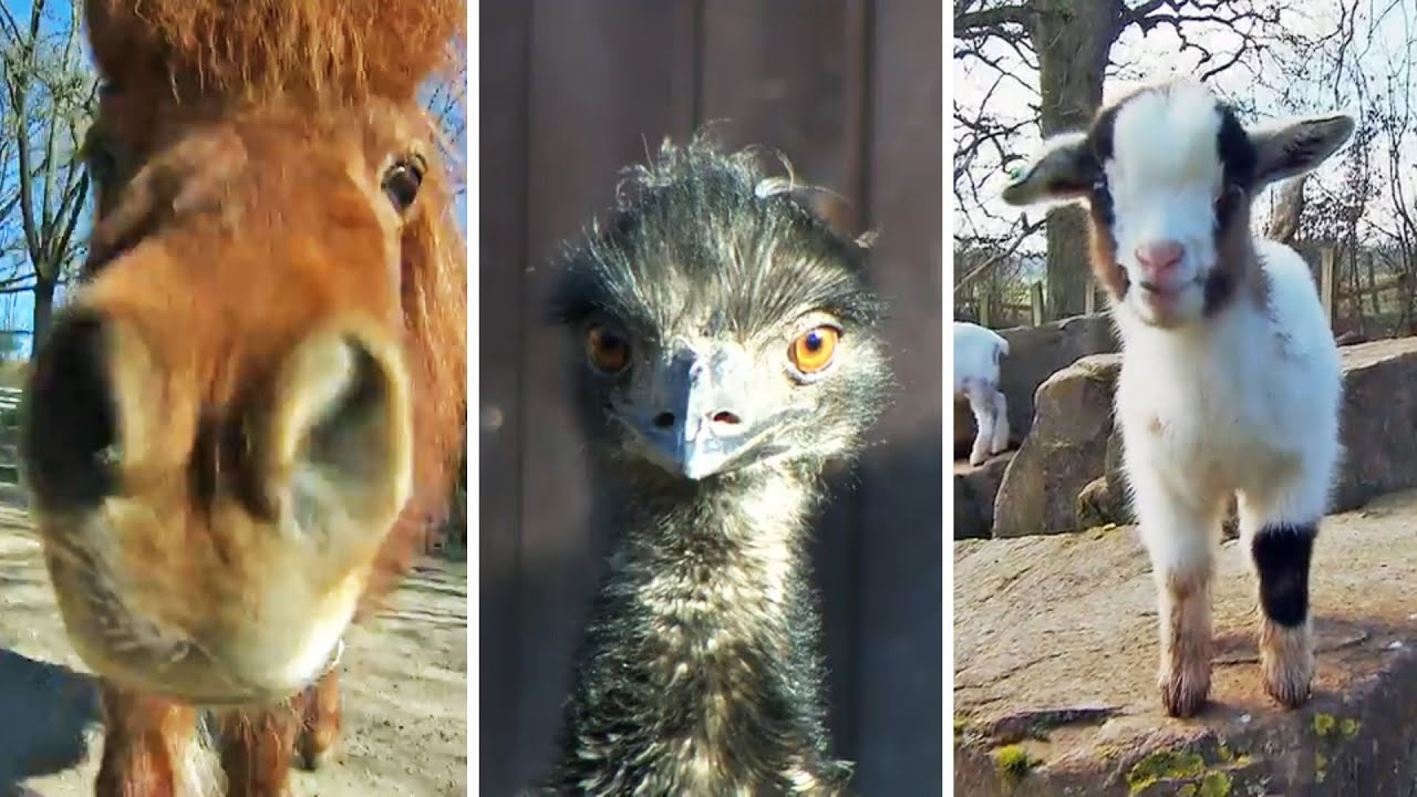 Tierparks In Hessen