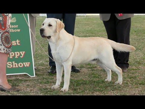 Windsor Dog Show 2015 - Best Puppy in Show