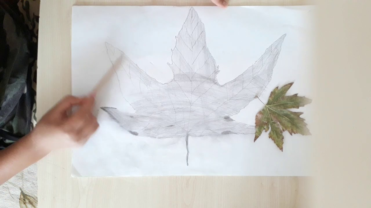 Yaprak Kara Kalem çizimi Youtube