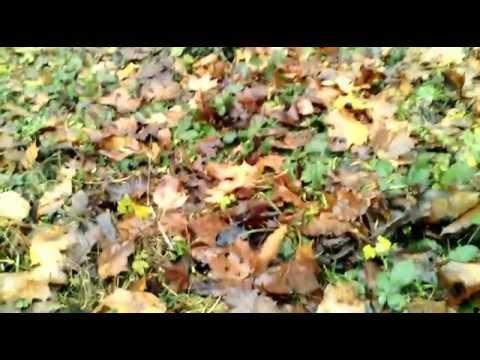 JiaYu F1  HD Camera Review test