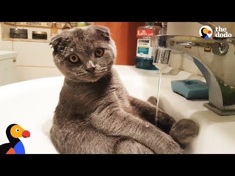 Cat Loves Taking Showers In The Sink | The Dodo