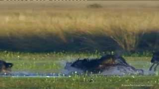 Sambia / Zambia by Reisefernsehen.com - Reisevideo / travel video