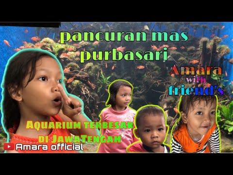 yang-hobi-koleksi-ikan,-aquarium-wajib-nonton-#jalan-jalan-bareng-amara-#4