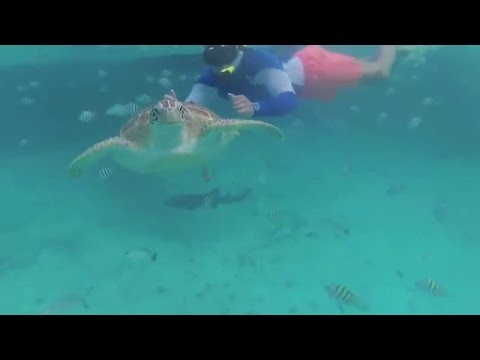 C&J Belize Vacation 2017