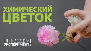 Химический цветок. Проведём эксперимент! №27