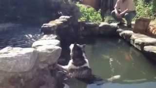 2012-10-25:在魚池裡放空中的噹妞 thumbnail