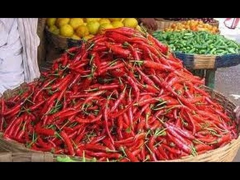 Guntur Mirchi Special - TV5 Travel Video