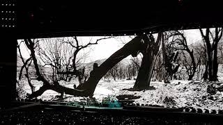 Ao vivo/ Live Joshua Tree.