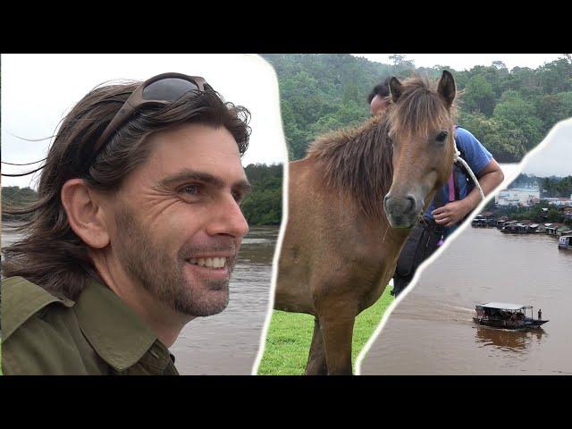 LES CHEVAUX POUR DULAN ARRIVENT [Kuda patroli untuk kawasan Dulan datang !]