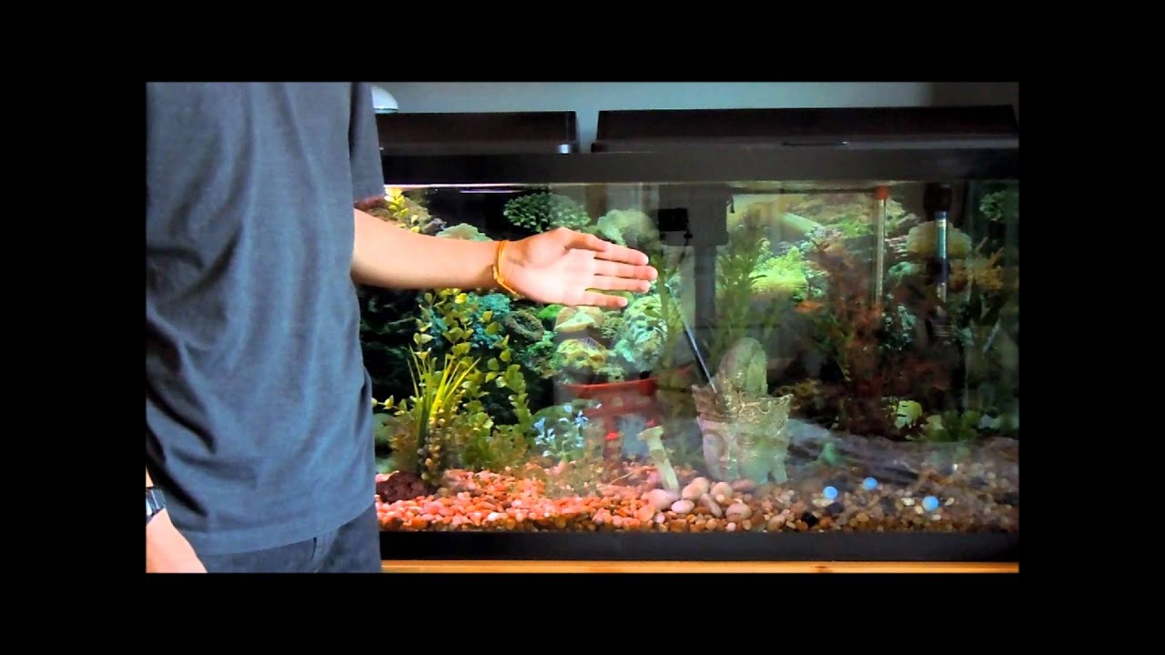 Setting up and maintaining a fish tank tutorial youtube for Setting up a fish tank