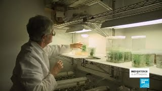 El negocio de la malaria: la gran farmacia frente a la medicina natural