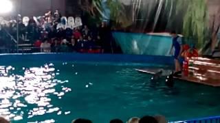 Четвёртое часть про дельфинов