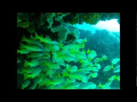Diving  Seychelles 2012