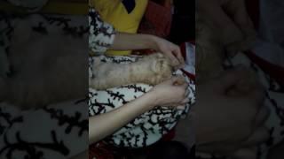 Котенок спит как убитый