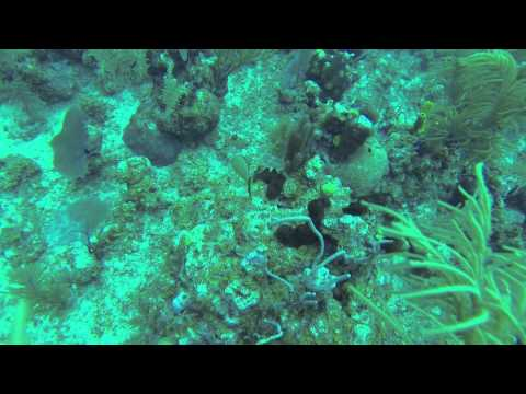 Cobalt Coast Resort Grand Cayman Island