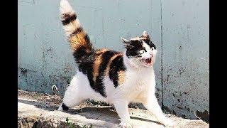 Смешные коты и котики, приколы про котов до слез – Смешные кошки – Funny Cats 20