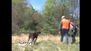 Pointing Dog Training With Navhda