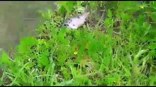 Тамбовский район, в пруду всплывает рыба