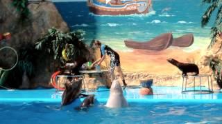 Одесский дельфинарий 2012(, 2013-01-25T08:52:11.000Z)