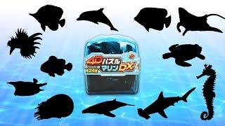 海の生き物の立体パズル 4Dパズル マリンDX 12個 サメ、カクレクマノミ、ウミガメ、イルカなど