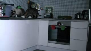 Коты одни дома (cats home alone)