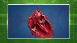 Профилактика, диагностика и лечение сердечно-сосудистых заболеваний.