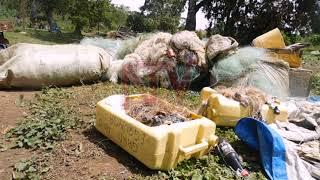 MWENYIGIRA MU NVUBA EMBI :Abavubi balangidde aba UPDF e Kalangala