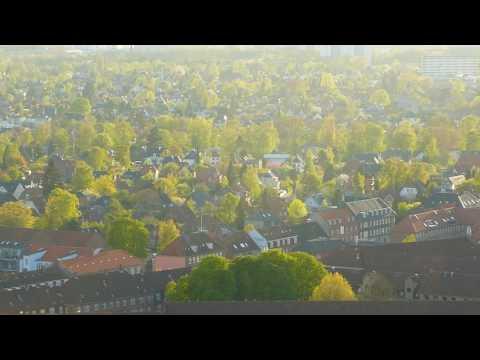 forår aftensol i træerne københavn - Spring evening sun in the trees copenhagen