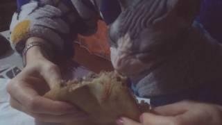 Масленица и кот