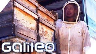 Leben zwischen Bienen - So hart ist der Job als Imker | Galileo | ProSieben