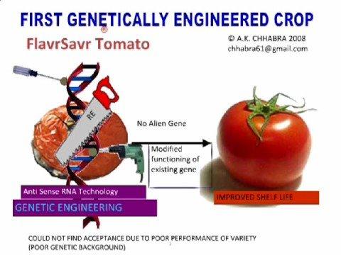 Genetic modifed food ipo