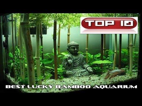 Top 10 Acquari Lucky Bamboo 🐠