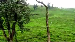 The Tea Capital Of Bangladesh- Awesome Sreemangal Tea Garden, Sylhet
