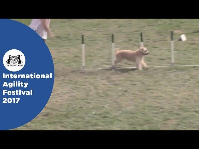 Nations Cup Final Medium - Part 1 | International Agility Festival 2017