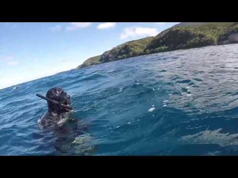 Wettie TV- 40kg+ Kingfish Spearfishing NEW ZEALAND