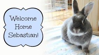 BudgetBunny: Welcome Home Sebastian!