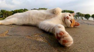 草むらの中にいた野良猫を撫でると喜んでベンチまでモフられに来た