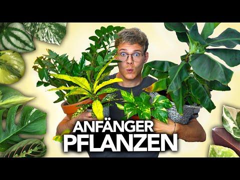 Die besten ZIMMERPFLANZEN für ANFÄNGER | Joey's Jungle Plants