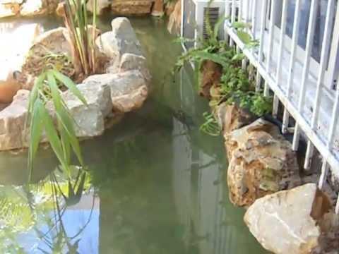 estanque para tortugas parte 3 casa nueva youtube