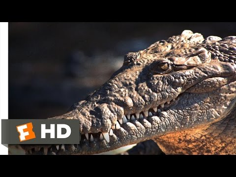 Live and Let Die (5/10) Movie CLIP - Feeding Time on the Crocodile Farm (1973) HD