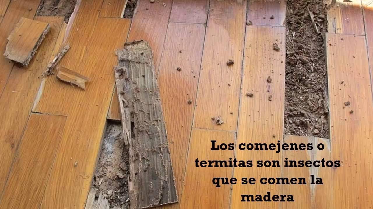 C mo eliminar el comej n o las termitas en su hogar youtube - Como eliminar la polilla de la madera ...