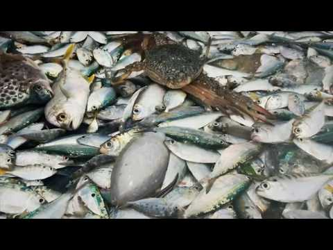 Gulf of Mannar: Trouble in Paradise – Part II