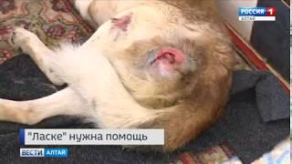 Общественная организация по защите бездомных животных «Ласка» просит о помощи всех неравнодушных
