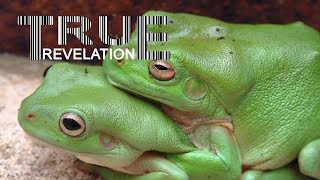 Are the frogs turning gay? thumbnail