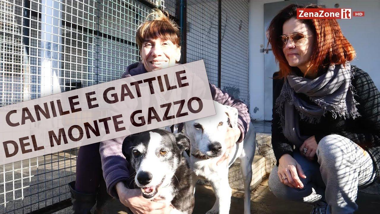 Cani e gatti adottabili al canile del gazzo 10 minuti al for Youtube cani e gatti